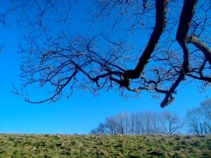 Winter Tree In Melplash