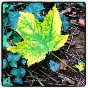 fallen autumn leaf on Allington Hill in Bridport, Dorset. Photo by Totallydorset