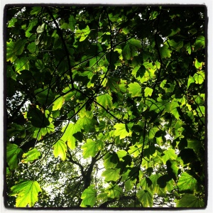 Looking up at green leaves on Allington Hill, Bridport, Dorset. Photo by Totallydorset.